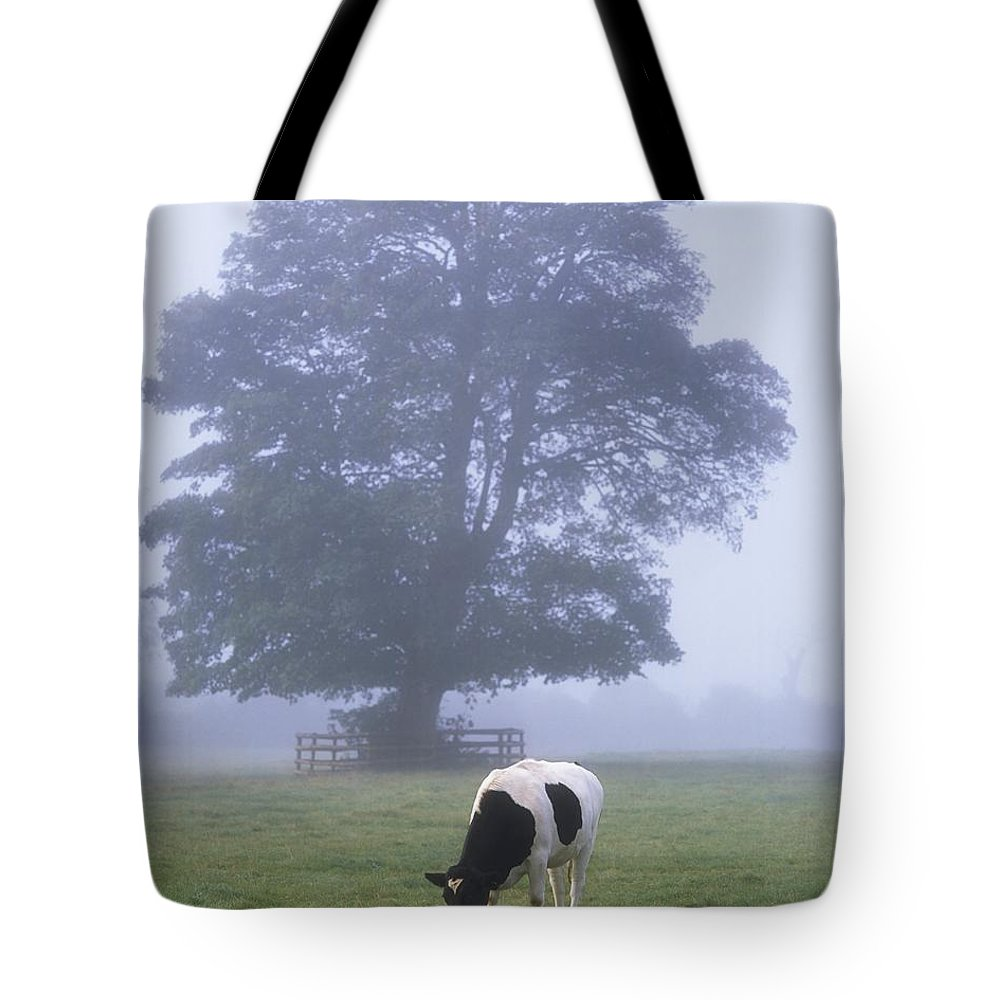 Animals Tote Bag featuring the photograph Friesian Cow, Ireland by The Irish Image Collection