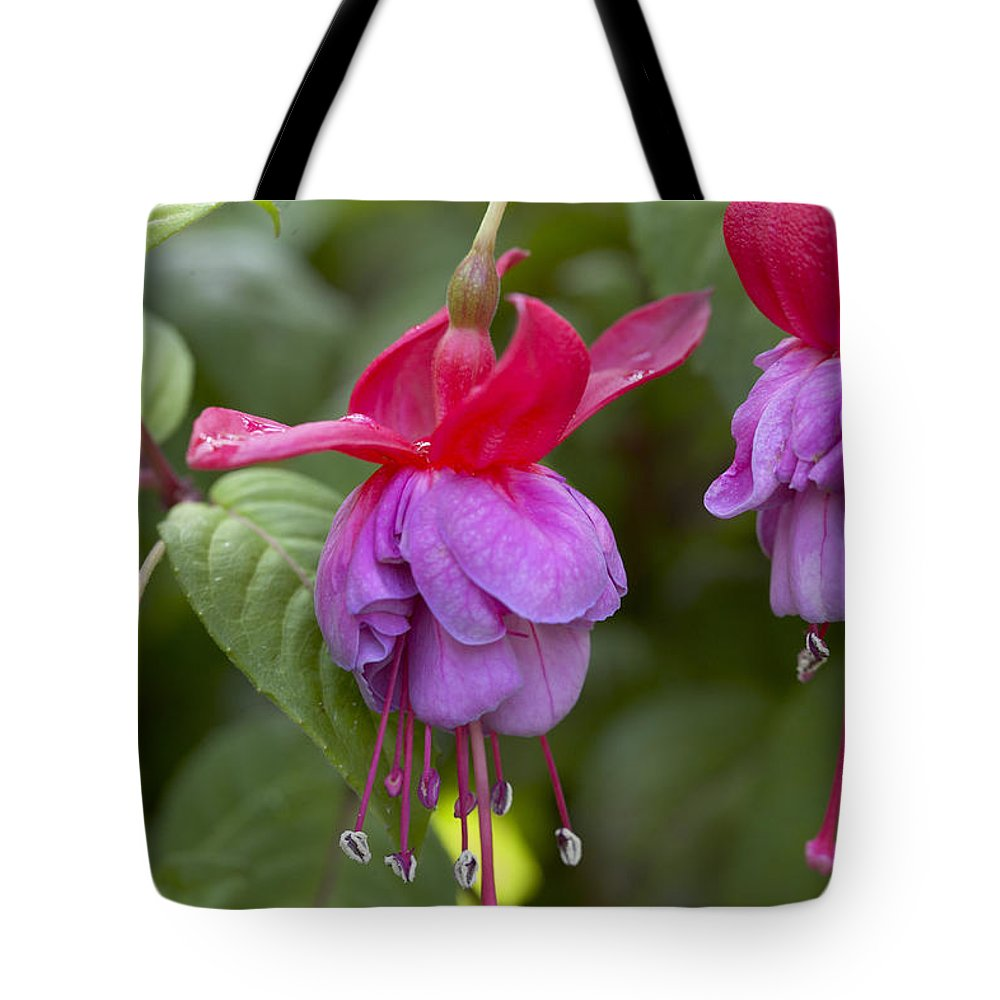 Vp Tote Bag featuring the photograph Fuchsia Fuchsia Sp Red And Blue Variety by VisionsPictures