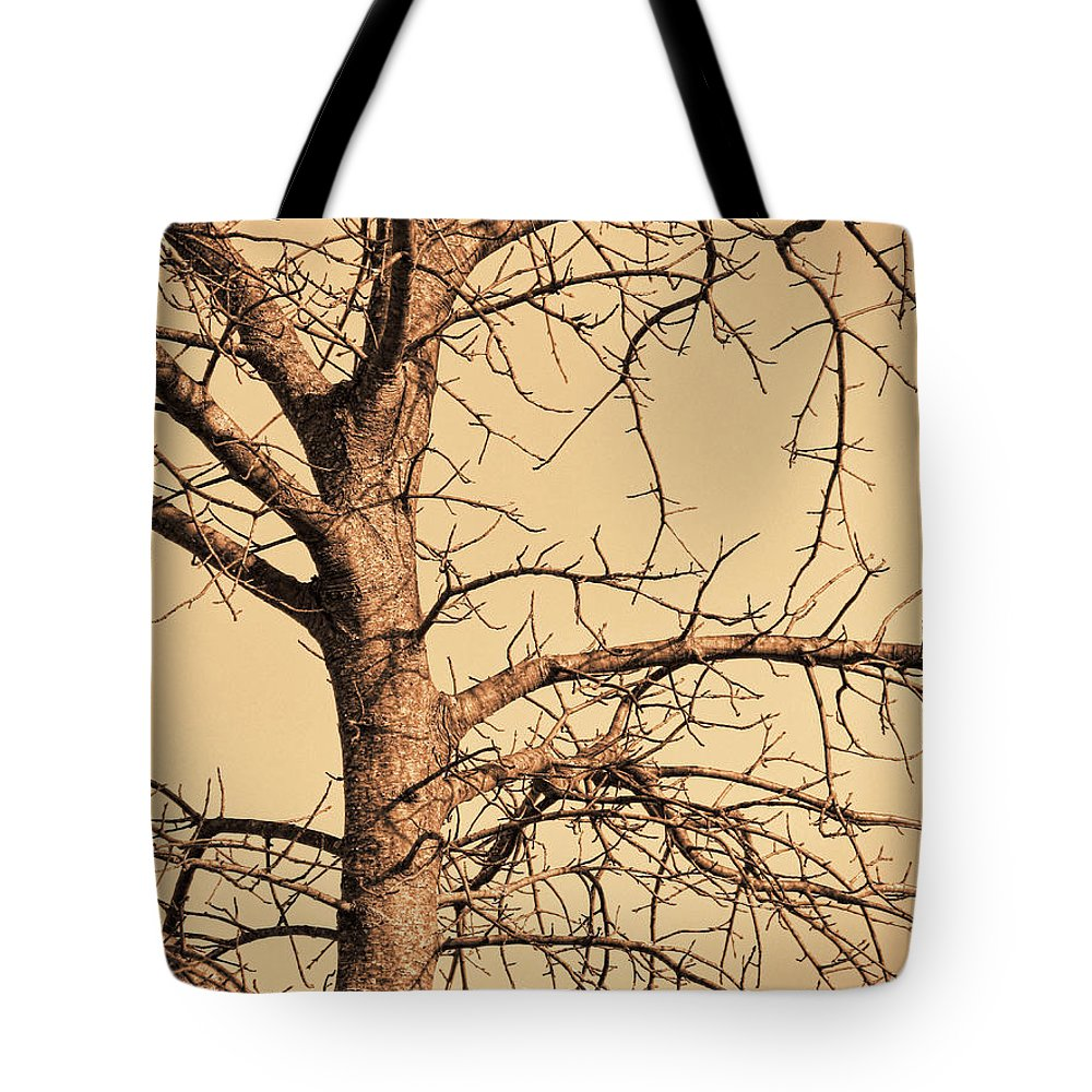 Leafless Tote Bag featuring the photograph Full Of Potential by Kathy Clark