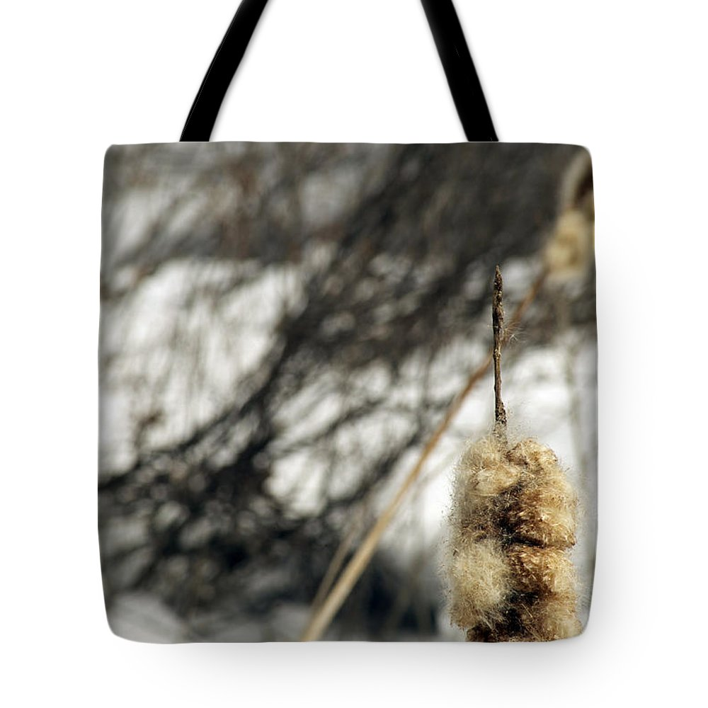 Bullrush Tote Bag featuring the photograph Fuzzy by Elaine Mikkelstrup