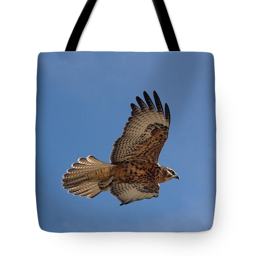 Galapagos Hawk Flying Tote Bag featuring the photograph Galapagos Hawk Flying by Sally Weigand