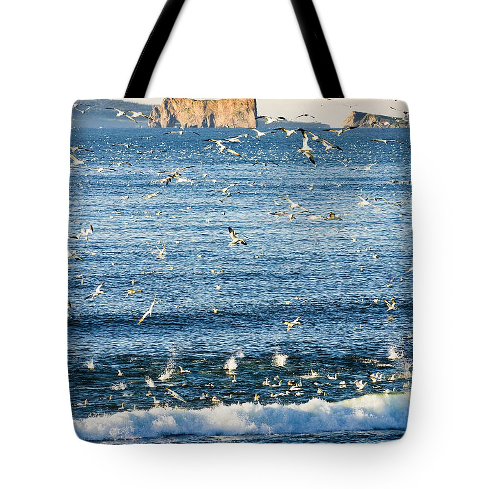 Colour Image Tote Bag featuring the photograph Gannets In Flight And Perce Rock by Yves Marcoux