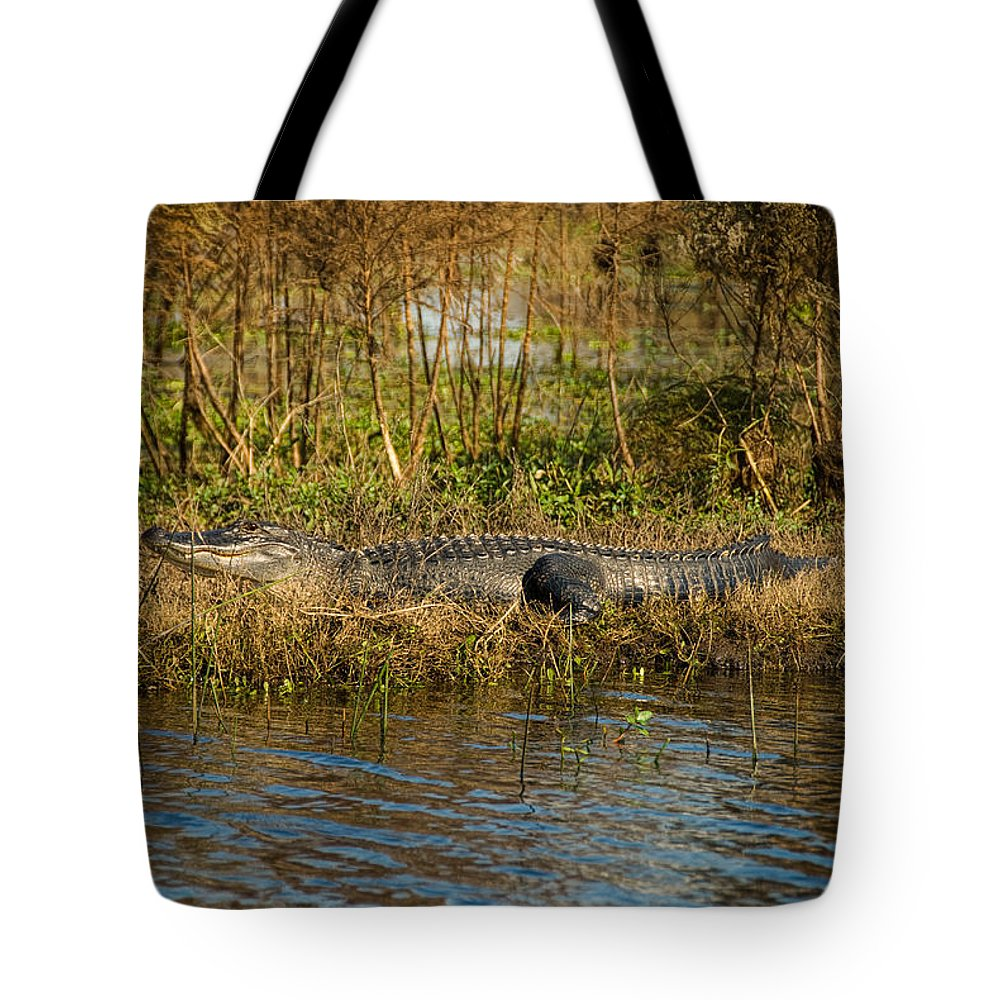 Alligator Tote Bag featuring the photograph Gator Break by Cindy Tiefenbrunn