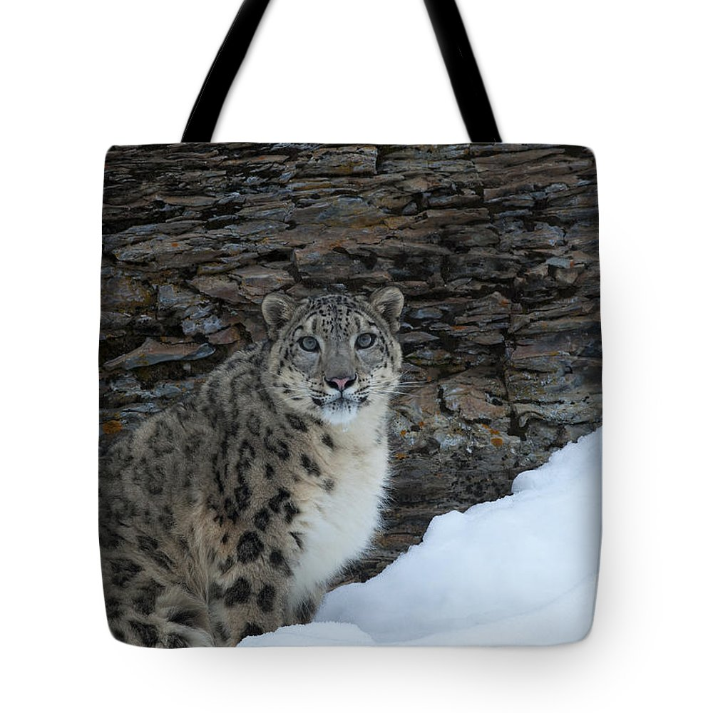 Sandra Bronstein Tote Bag featuring the photograph Gaze Of The Snow Leopard by Sandra Bronstein