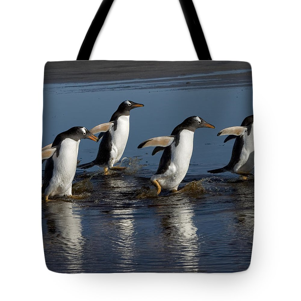 Color Image Tote Bag featuring the photograph Gentoo Penguin Pygoscelis Papua Group by Hiroya Minakuchi