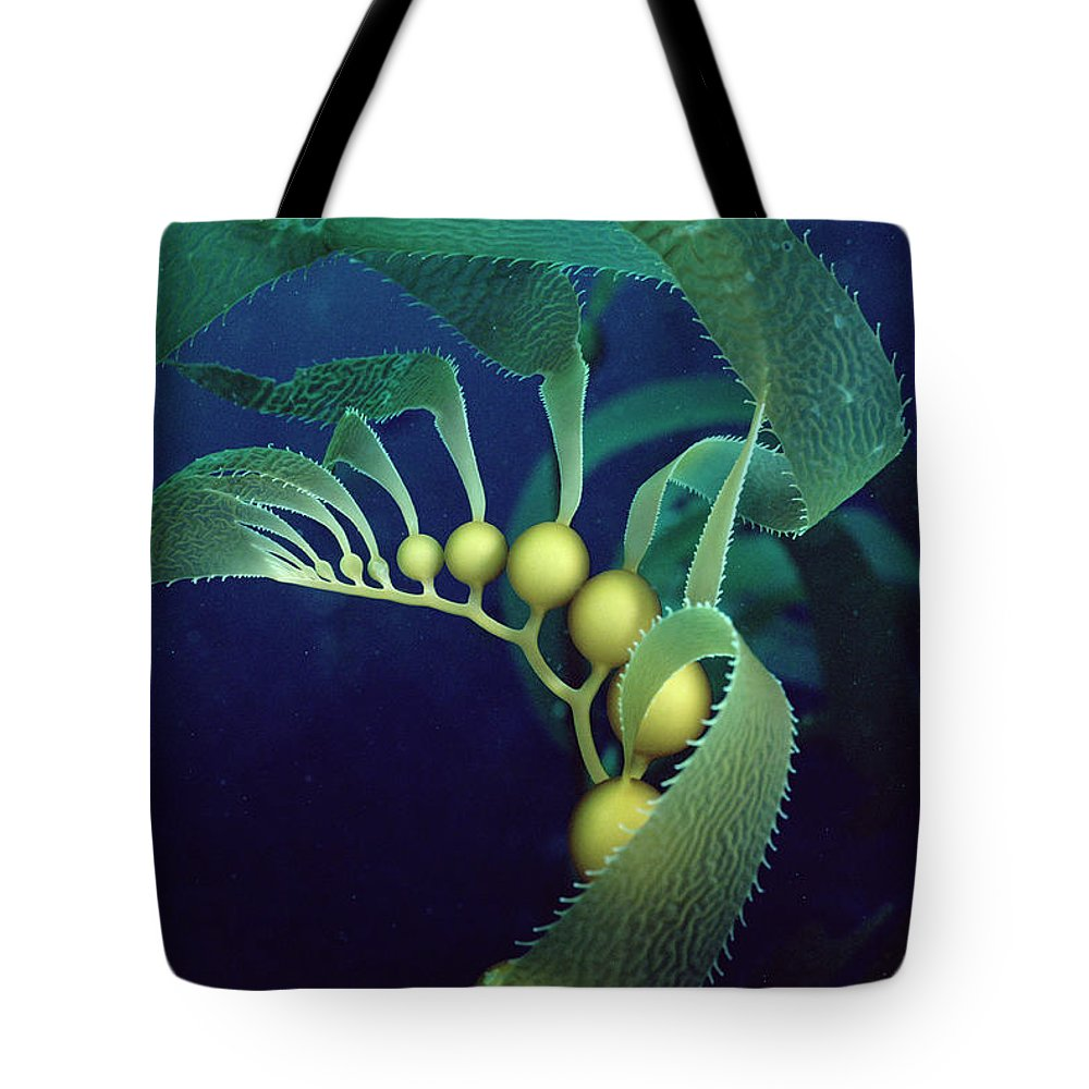 Color Image Tote Bag featuring the photograph Giant Kelp Detail by Flip Nicklin