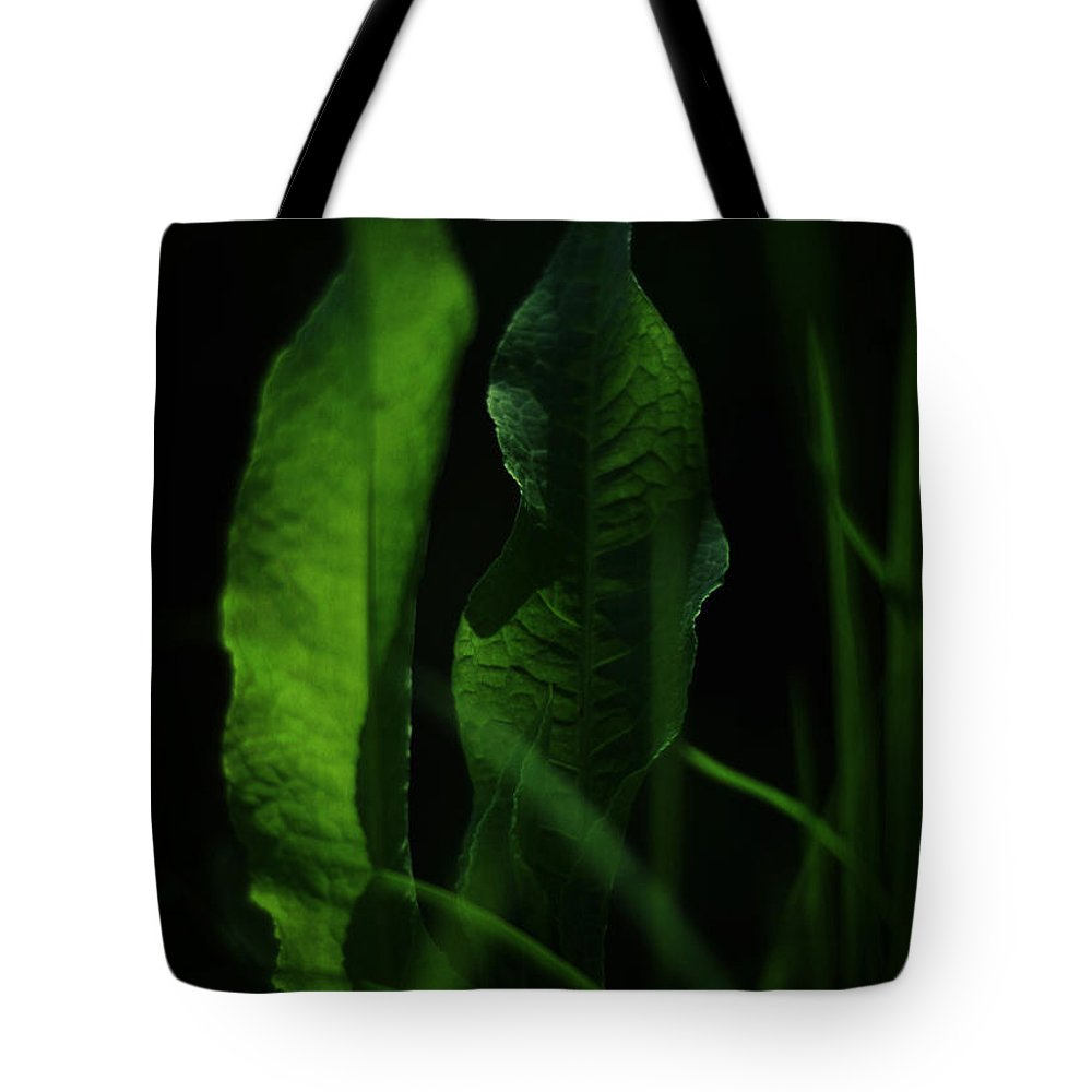 rumex Crispus Tote Bag featuring the photograph Ginsberg by Rebecca Sherman