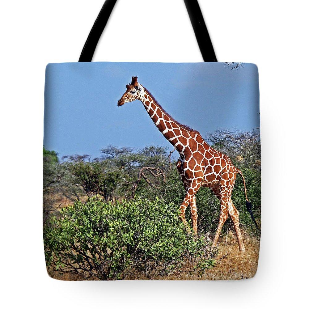 Giraffa Camelopardalis Reticulata Tote Bag featuring the photograph Giraffe Against Blue Sky by Tony Murtagh