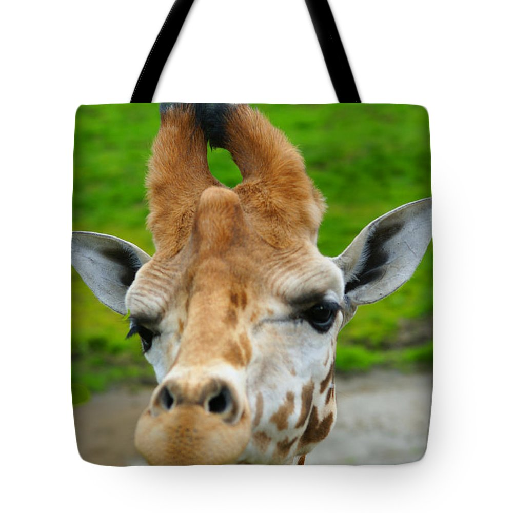 Giraffes Tote Bag featuring the photograph Giraffe In The Park by Randy Harris