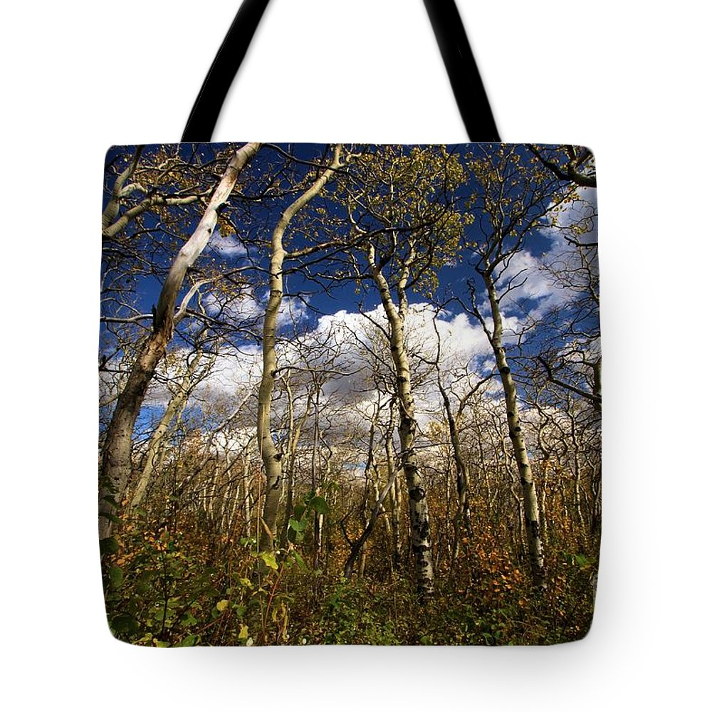 Aspen Trees Tote Bag featuring the photograph Glacier Aspens by Adam Jewell