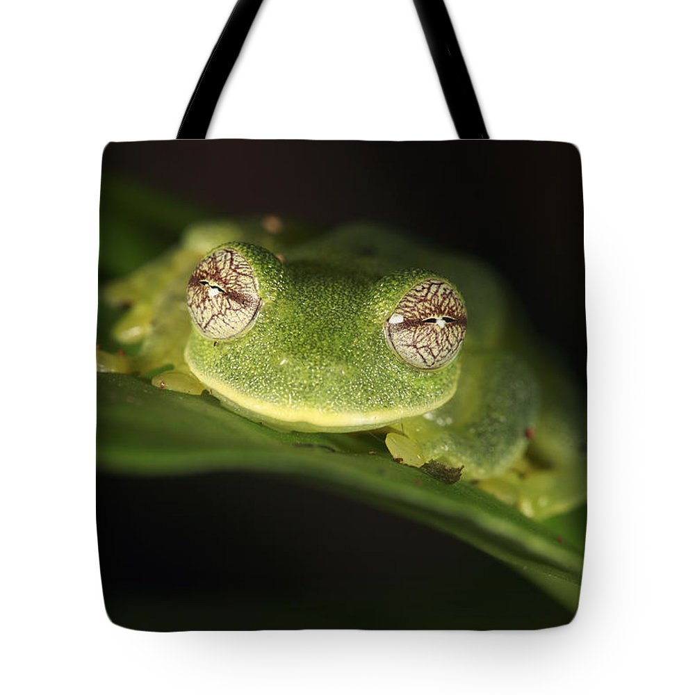 Mp Tote Bag featuring the photograph Glass Frog Centrolene Tayrona, Sierra by Cyril Ruoso