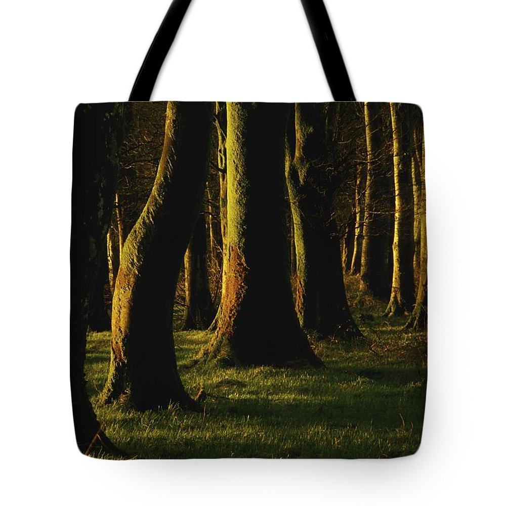 Cork Tote Bag featuring the photograph Glenville Woods, County Cork, Ireland by Richard Cummins