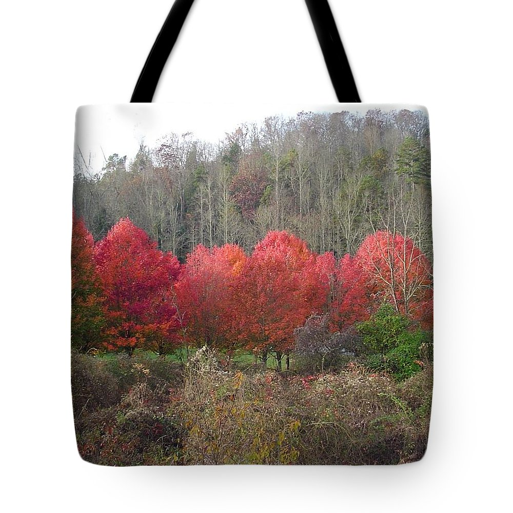 Trees Tote Bag featuring the photograph Glowing Red by Michael MacGregor