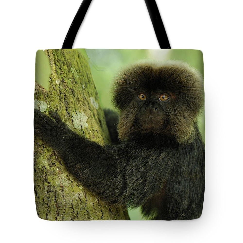 Mp Tote Bag featuring the photograph Goeldis Monkey Callimico Goeldii by Thomas Marent