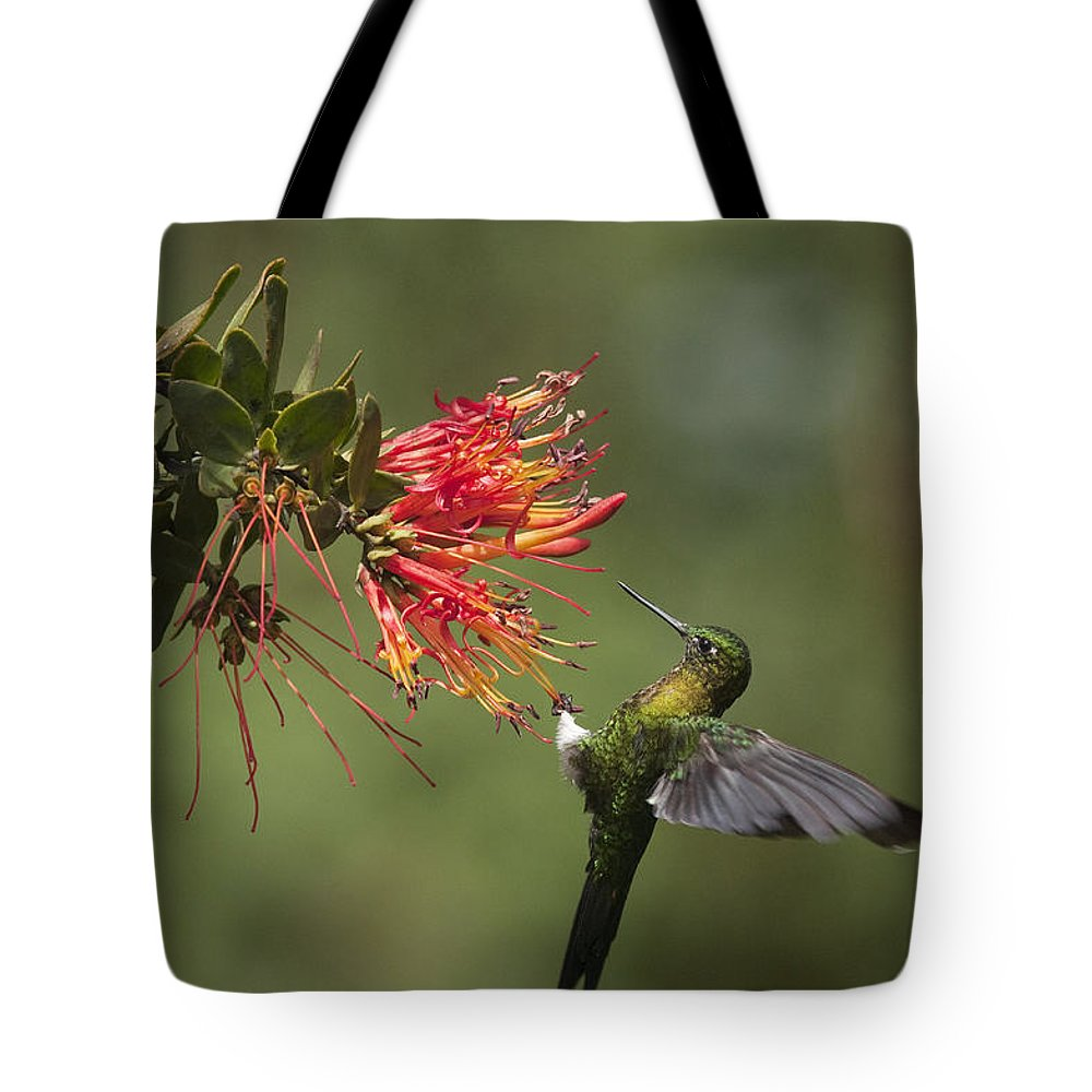 Mp Tote Bag featuring the photograph Golden-breasted Puffleg Eriocnemis by Murray Cooper