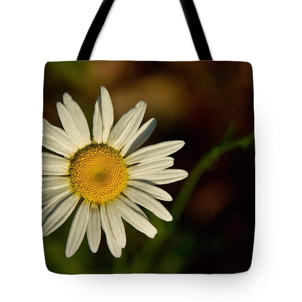 Asteraceae Tote Bag featuring the photograph Golden Daisy 1 by Douglas Barnett