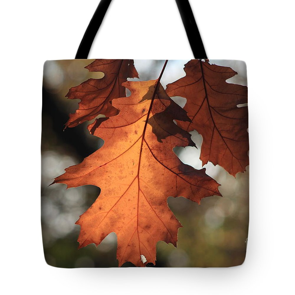 Leaf Tote Bag featuring the photograph Golden Fall Leave's Close Up by Robert D Brozek
