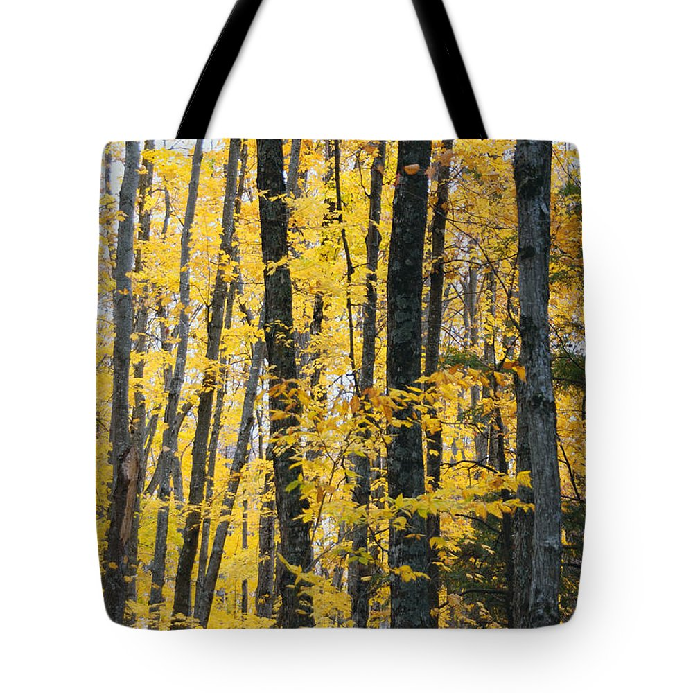 Fall Colors Tote Bag featuring the photograph Golden Forest by Optical Playground By MP Ray