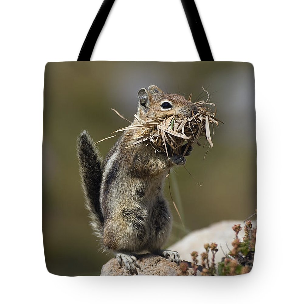 Mp Tote Bag featuring the photograph Golden-mantled Ground Squirrel by Konrad Wothe