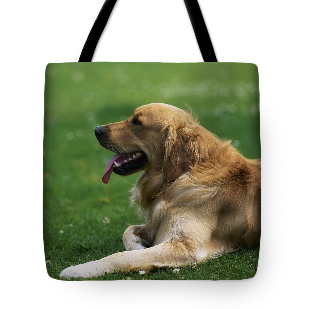 Day Tote Bag featuring the photograph Golden Retriever Dog Laying In The Grass by Sici