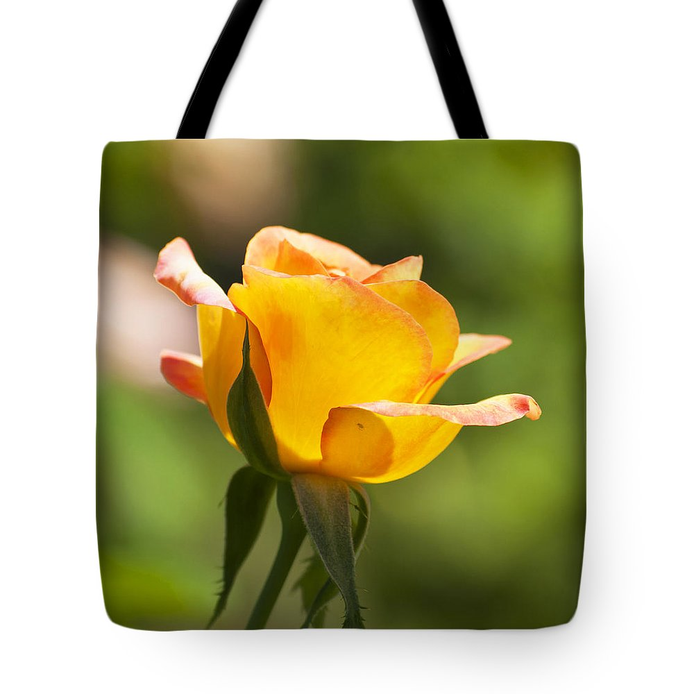 Nature Tote Bag featuring the photograph Golden Rose by Kenneth Albin