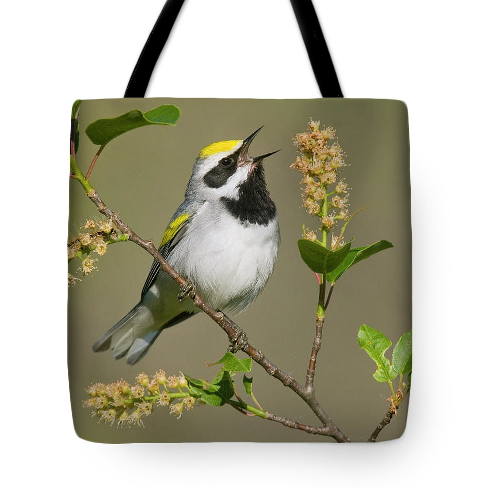 Mp Tote Bag featuring the photograph Golden-winged Warbler Vermivora by Steve Gettle