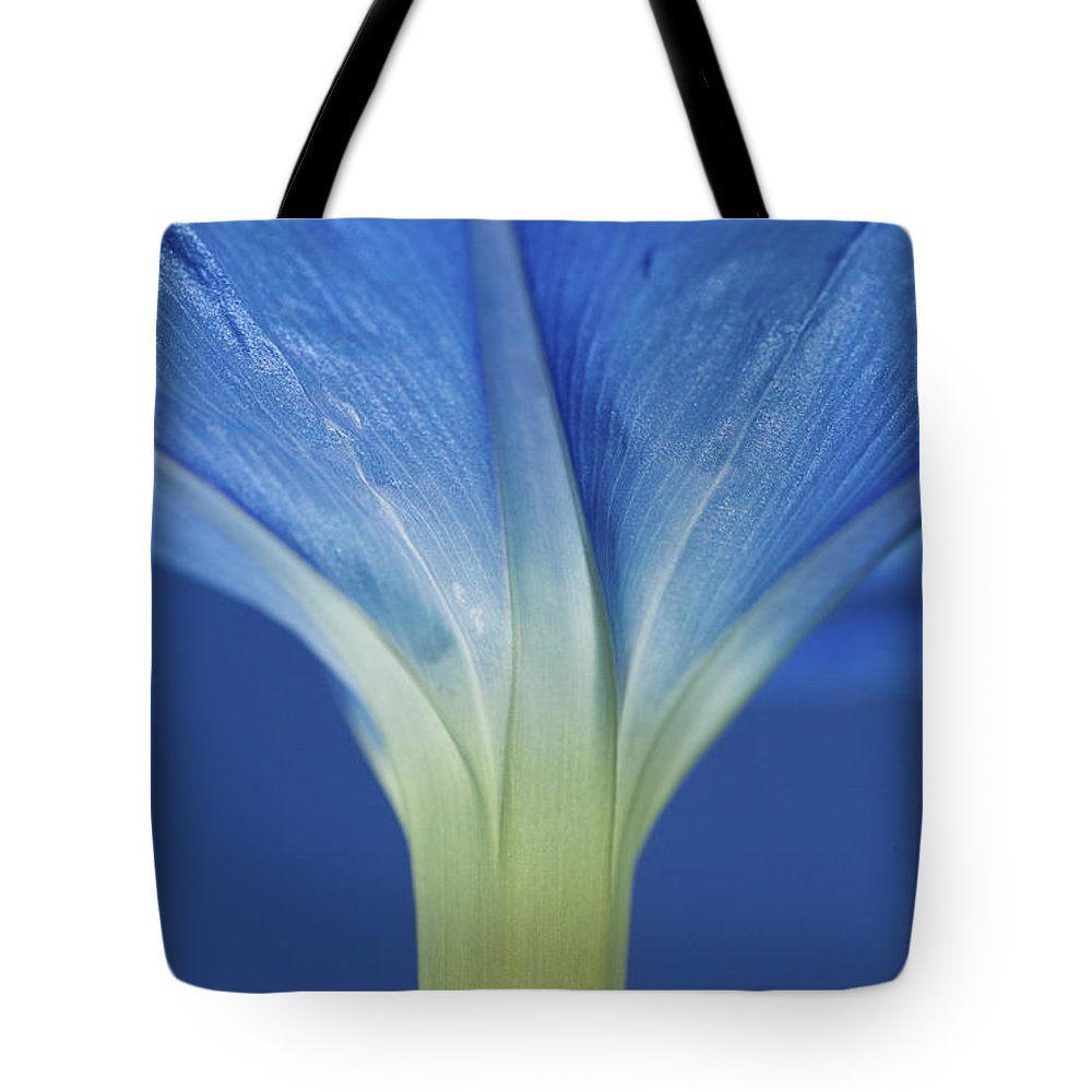 Morning Glory Tote Bag featuring the photograph Good Morning Glory by Rich Franco