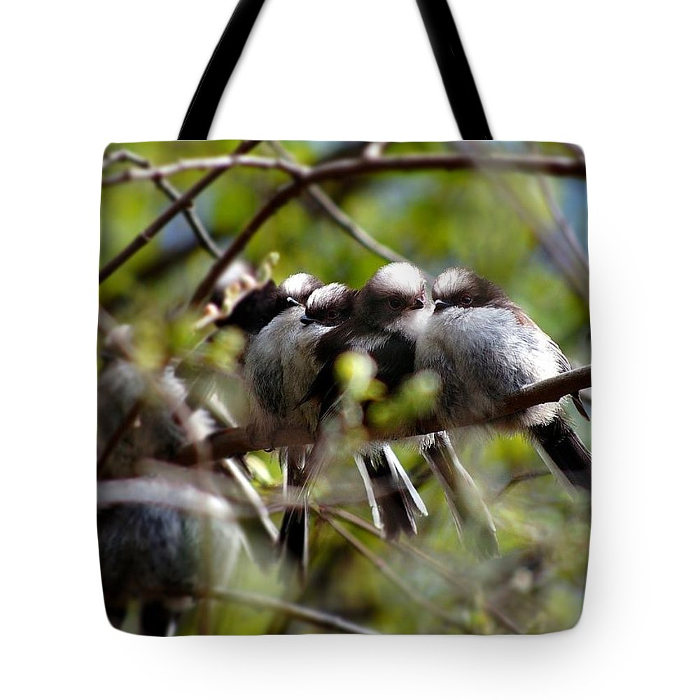 Long-tailed Tits Tote Bag featuring the photograph Gossip Birds by Gavin Macrae