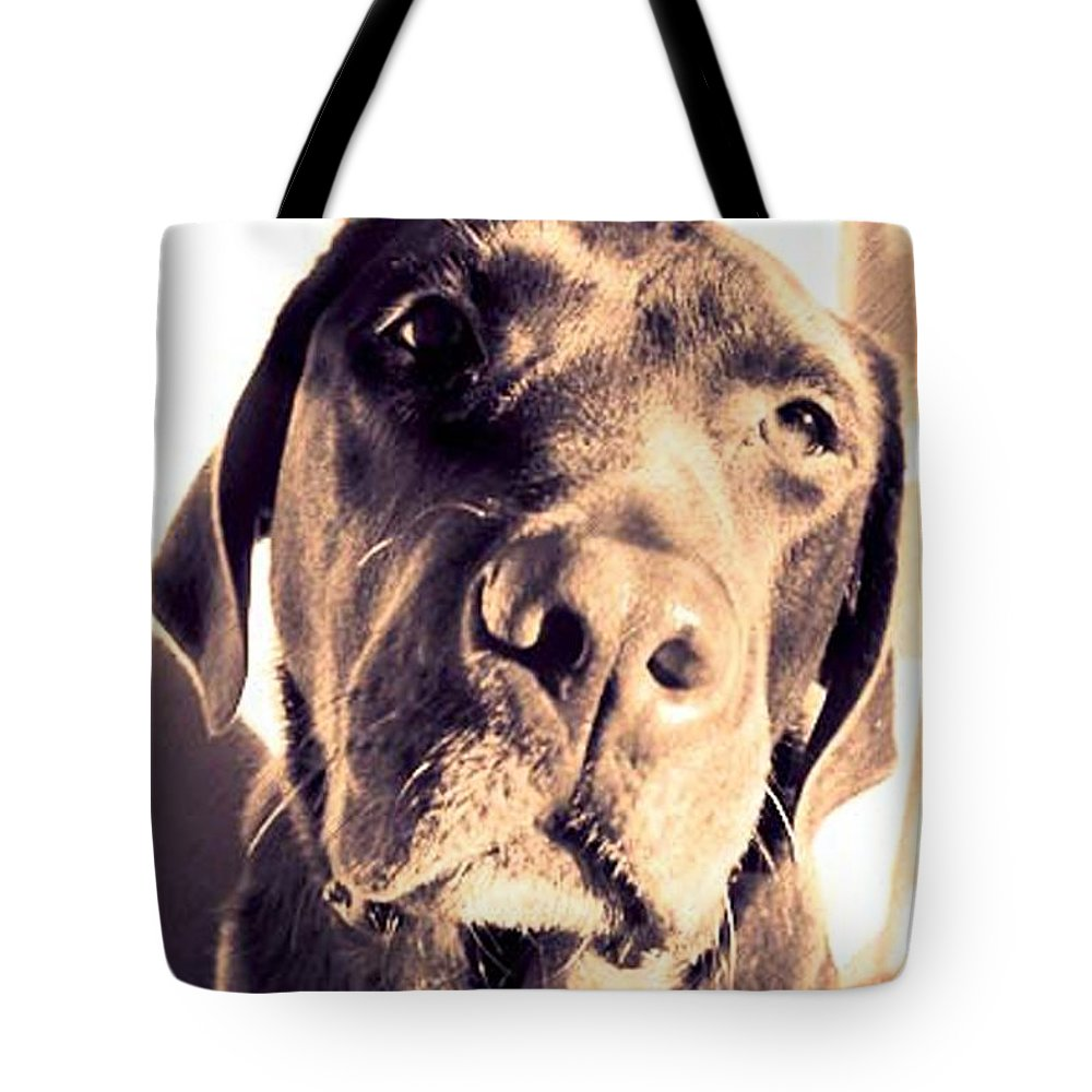 Animals Tote Bag featuring the photograph Got Biscuits by Timothy Mangino