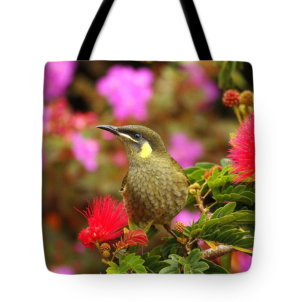 Graceful Honeyeater Tote Bag featuring the photograph Graceful Honeyeater by Andrew McInnes