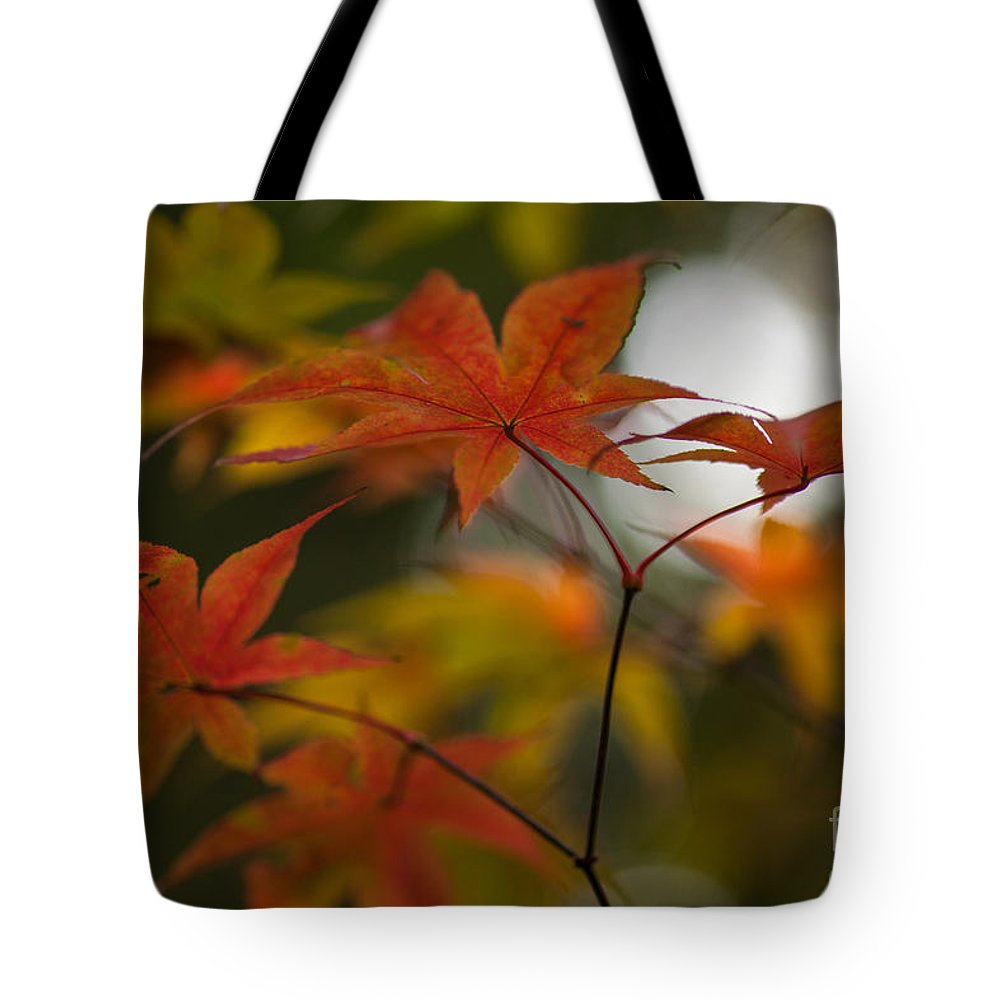 Acer Tote Bag featuring the photograph Graceful Layers by Mike Reid