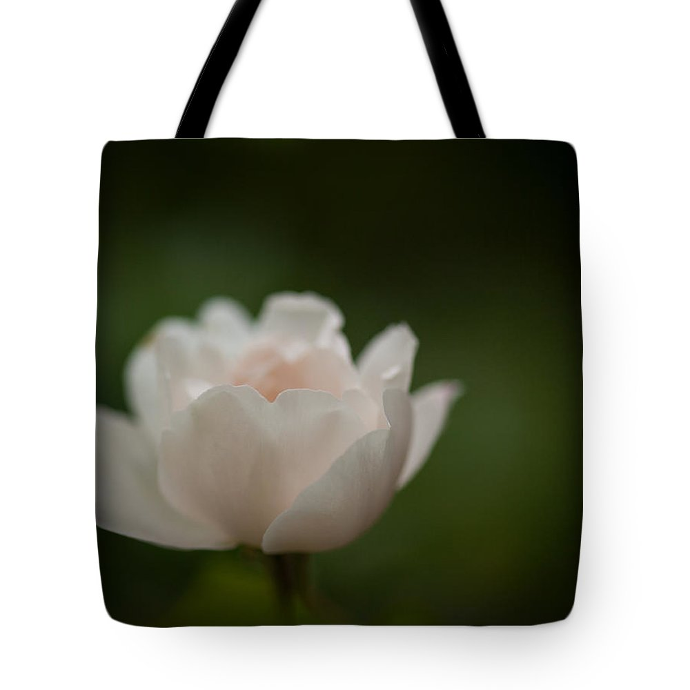 Rose Tote Bag featuring the photograph Graceful Light by Mike Reid