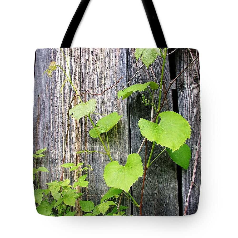 Grape Vines Tote Bag featuring the photograph Grape Vines On An Old Barn by Sherman Perry