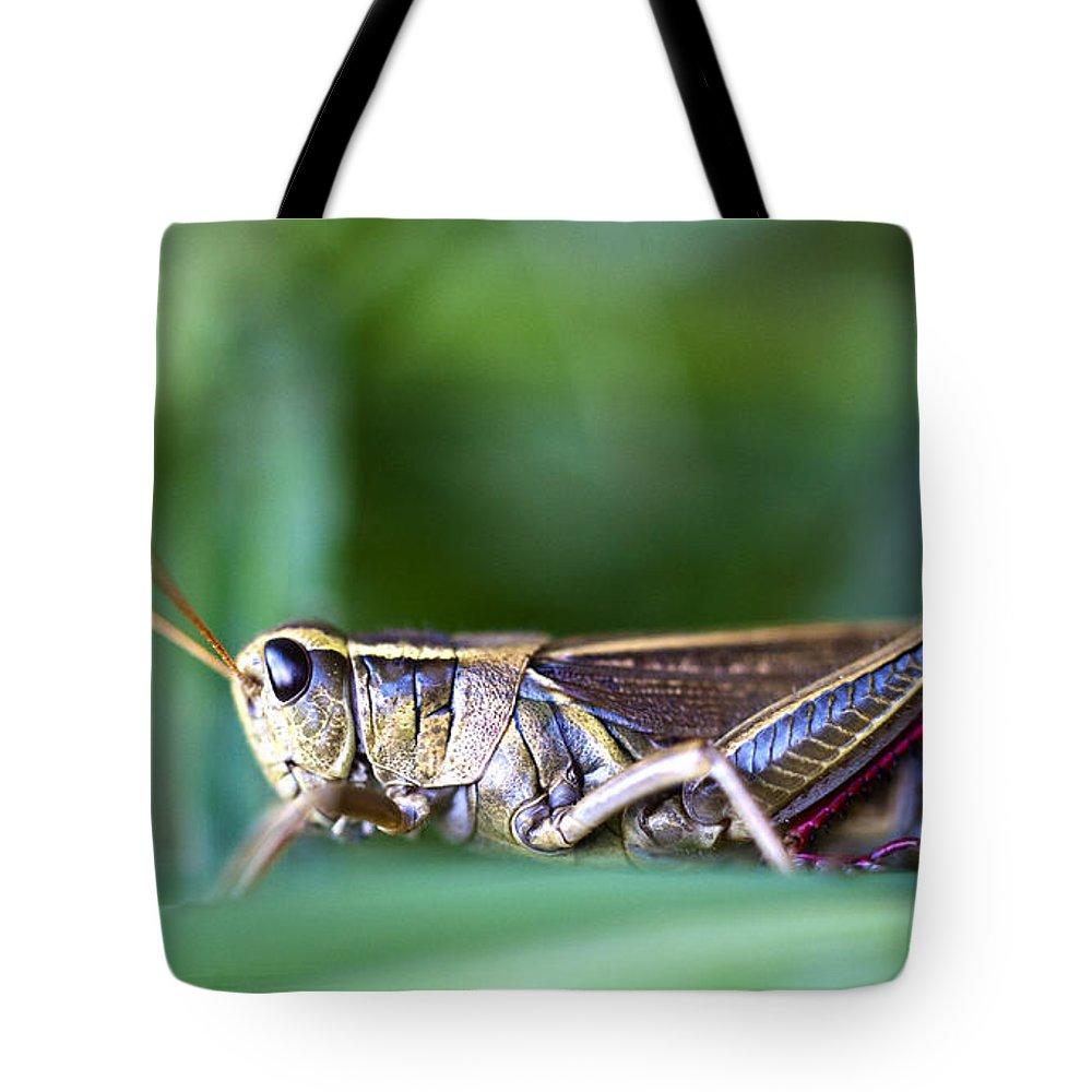 Grasshopper Tote Bag featuring the photograph Grasshopper by Glenn Gordon