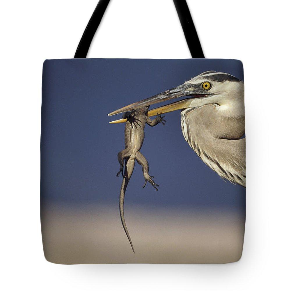 Amblyrhynchus Cristatus Tote Bag featuring the photograph Great Blue Heron Ardea Herodias Preying by Tui De Roy