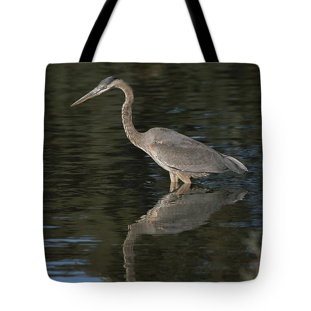 Animals Tote Bag featuring the photograph Great Blue Heron by Marc Moritsch