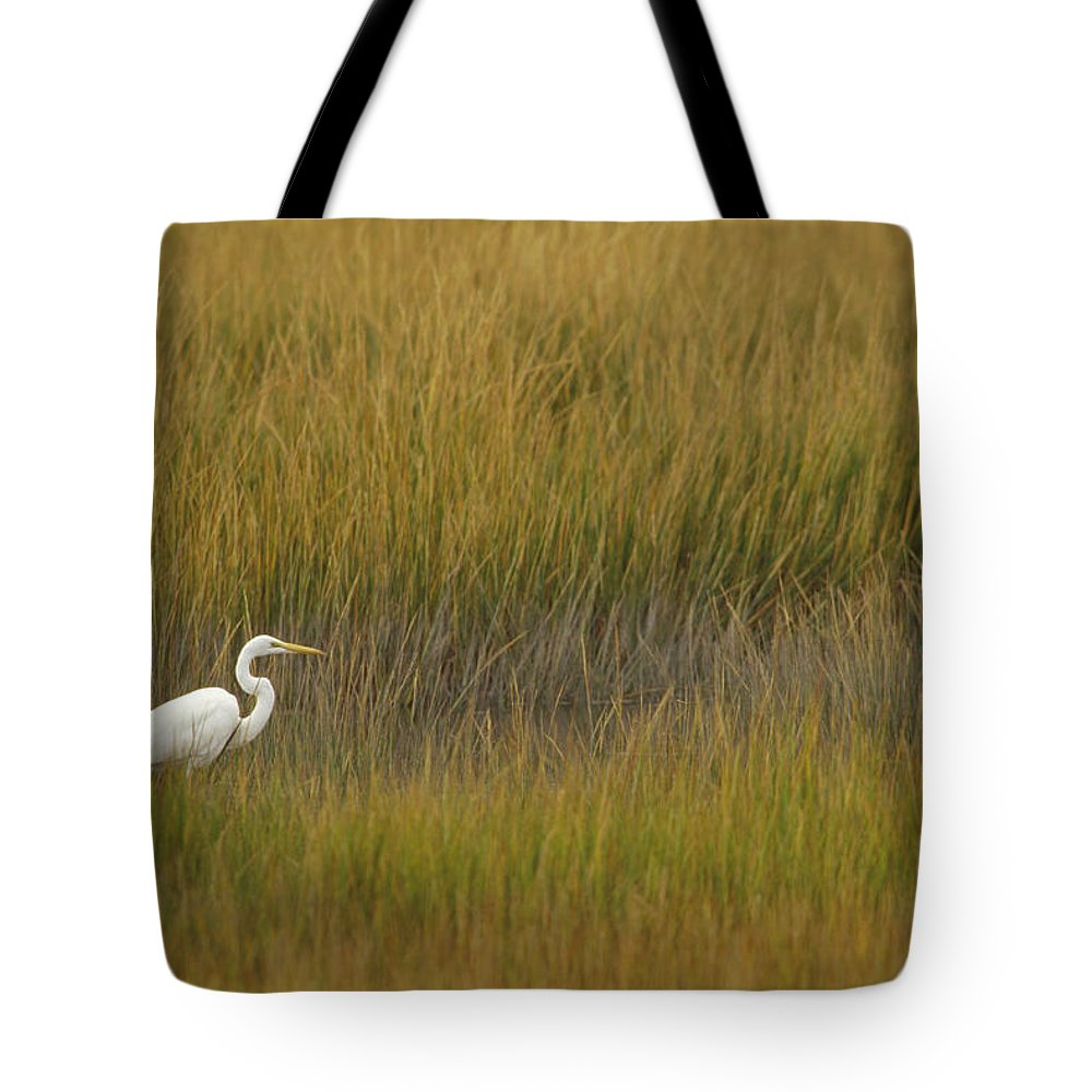 Animal In Landscape Tote Bag featuring the photograph Great Egret Ardea Alba Amid Marsh by Gerry Ellis