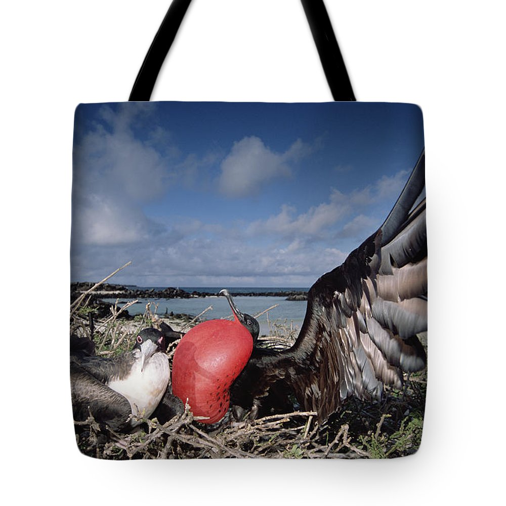 Color Image Tote Bag featuring the photograph Great Frigatebirds Courting by Tui De Roy