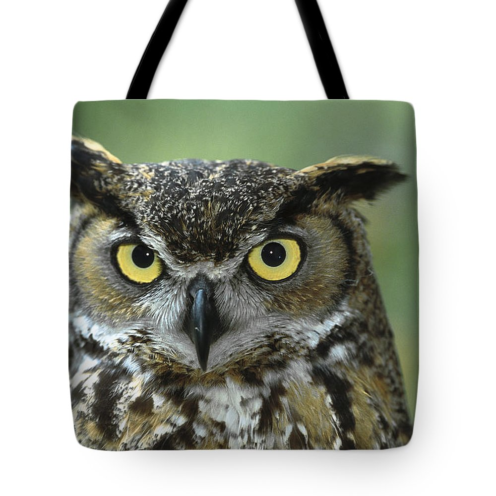 Bubo Virginianus Tote Bag featuring the photograph Great Horned Owl Bubo Virginianus by Zssd
