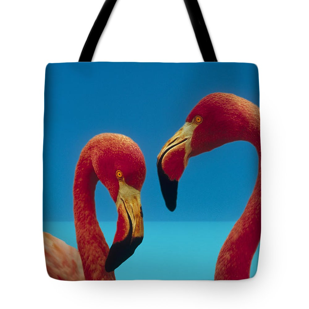 00172310 Tote Bag featuring the photograph Greater Flamingo Courting Pair by Tim Fitzharris