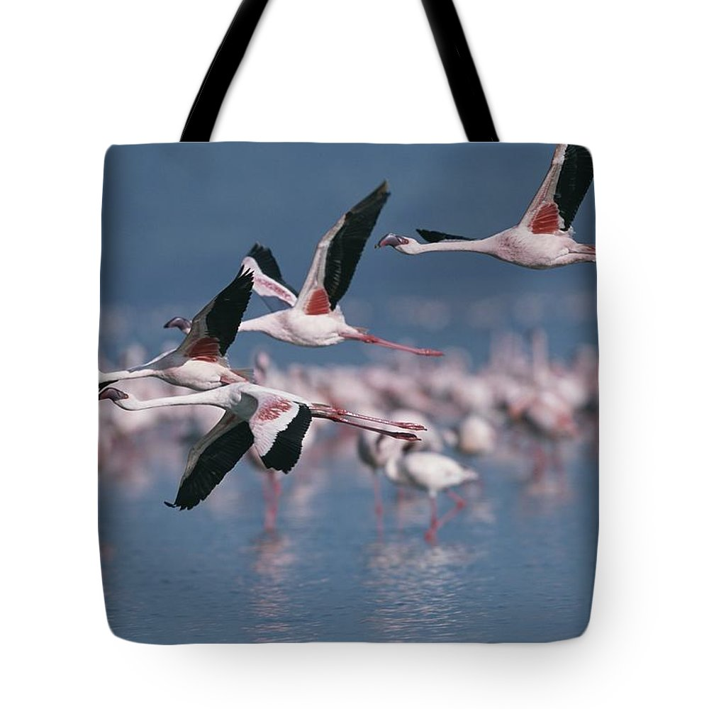 Africa Tote Bag featuring the photograph Greater Flamingos In Flight Over Lake by Roy Toft