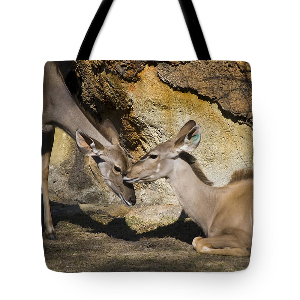 Greater Kudu Tote Bag featuring the photograph Greater Kudu Affection by Diego Re