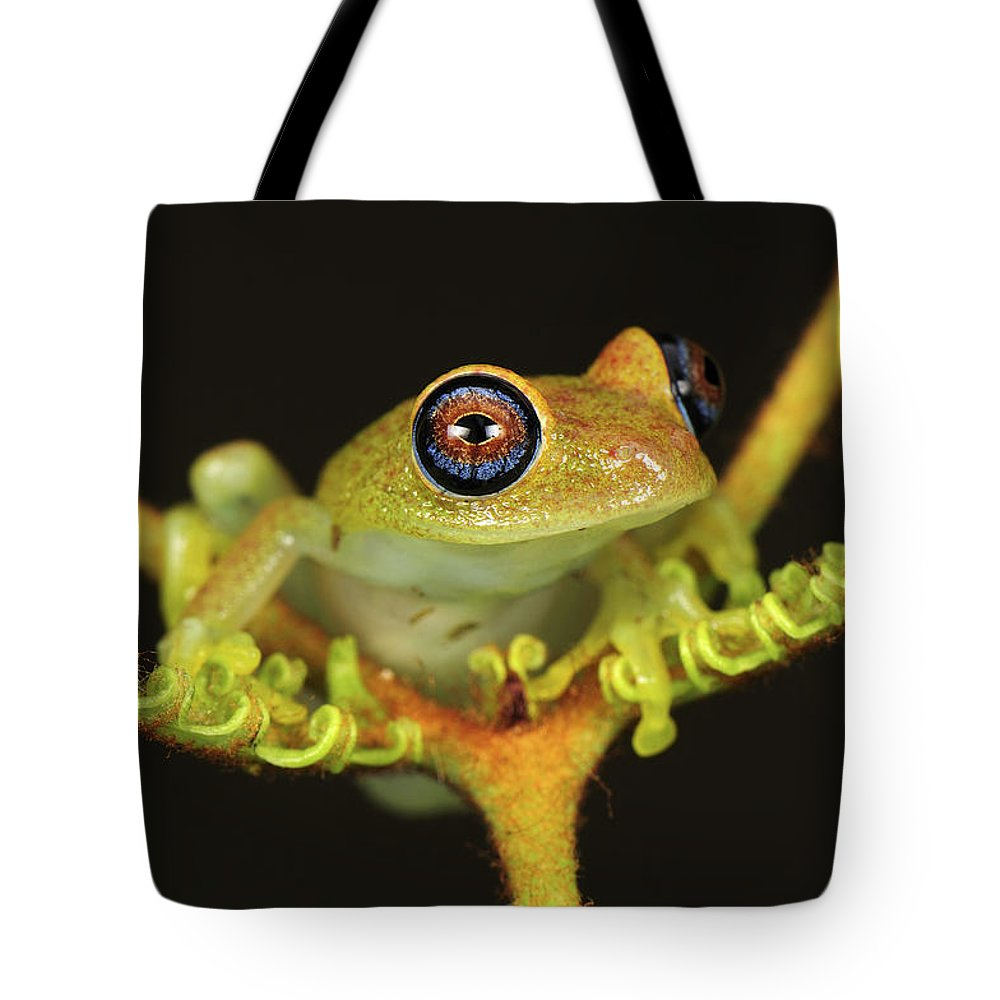Mp Tote Bag featuring the photograph Green Bright-eyed Frog Boophis Viridis by Thomas Marent