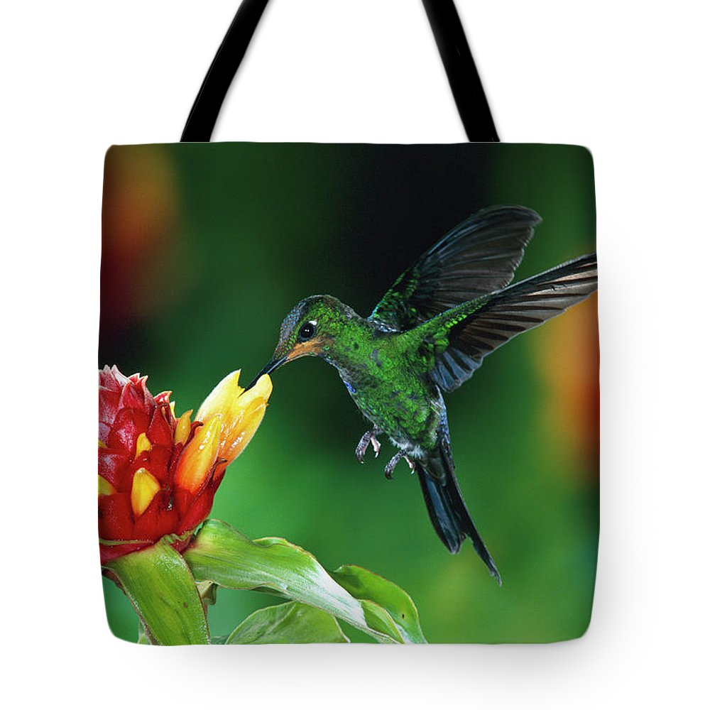 Close Up Tote Bag featuring the photograph Green Crowned Brilliant Hummingbird by Michael and Patricia Fogden