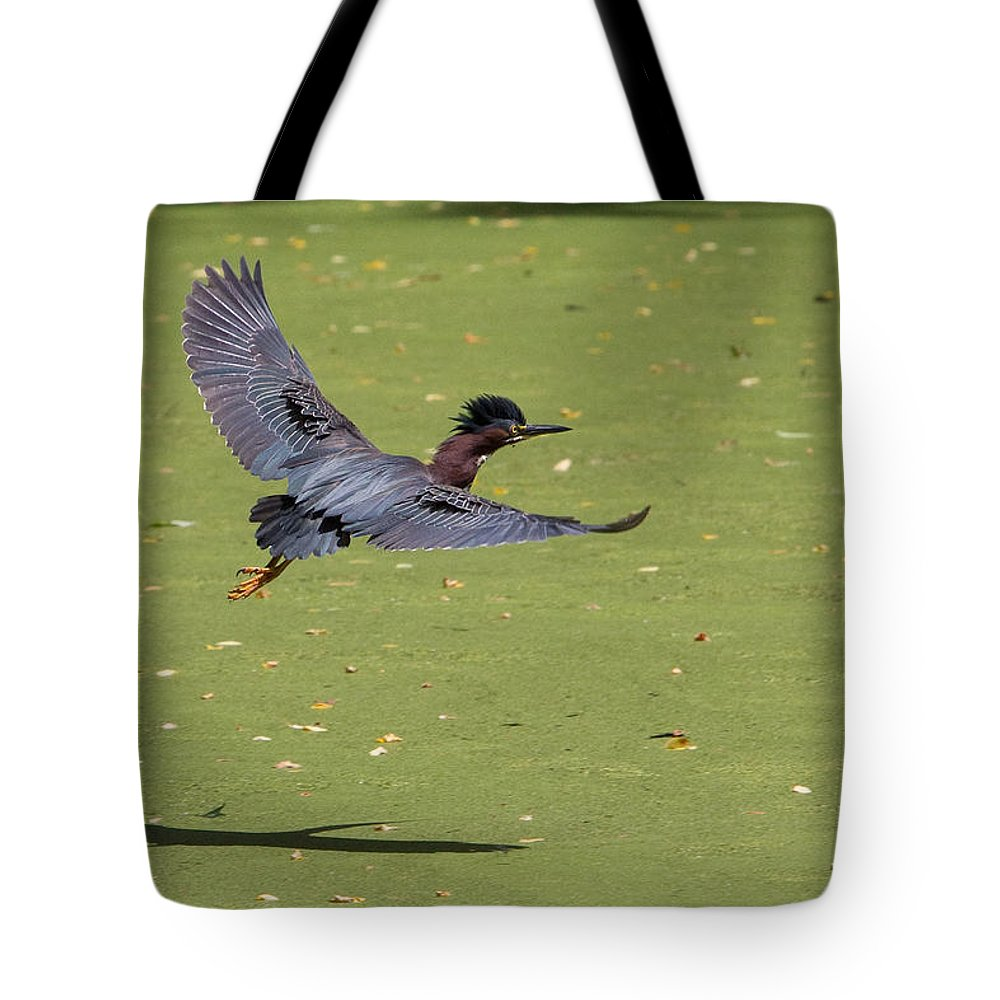 Green Heron Tote Bag featuring the photograph Green Heron In Flight by Stephanie McDowell