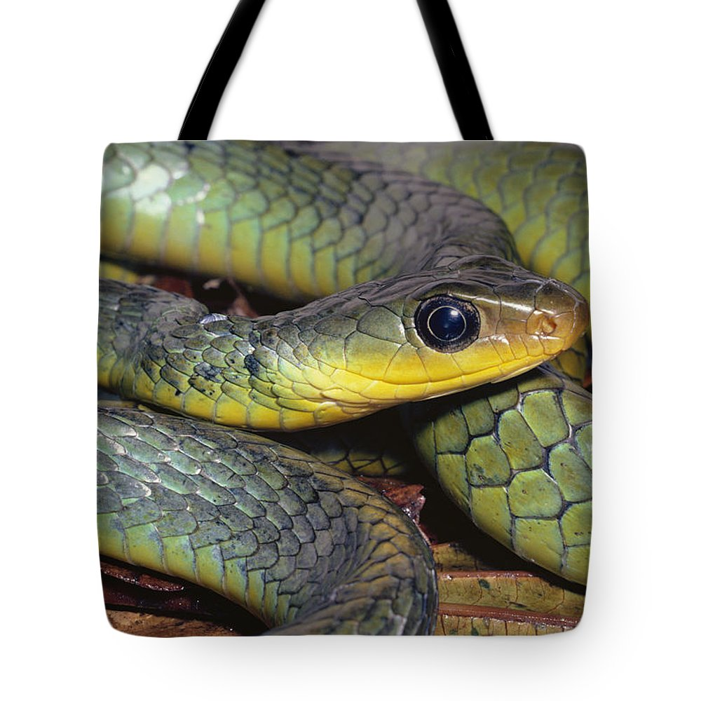 Mp Tote Bag featuring the photograph Green Racer Chironius Exoletus by Michael & Patricia Fogden