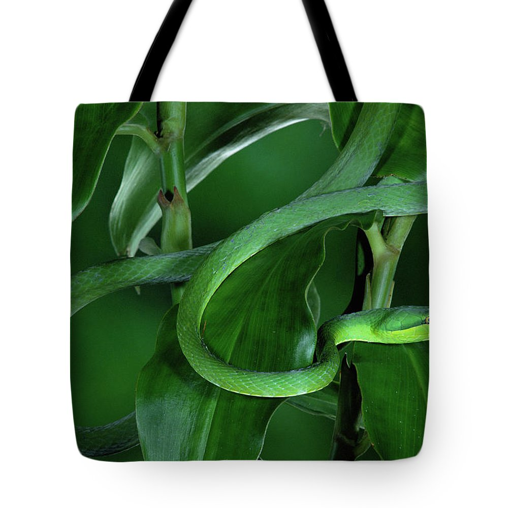 Mp Tote Bag featuring the photograph Green Vine Snake Oxybelis Fulgidus by Michael & Patricia Fogden