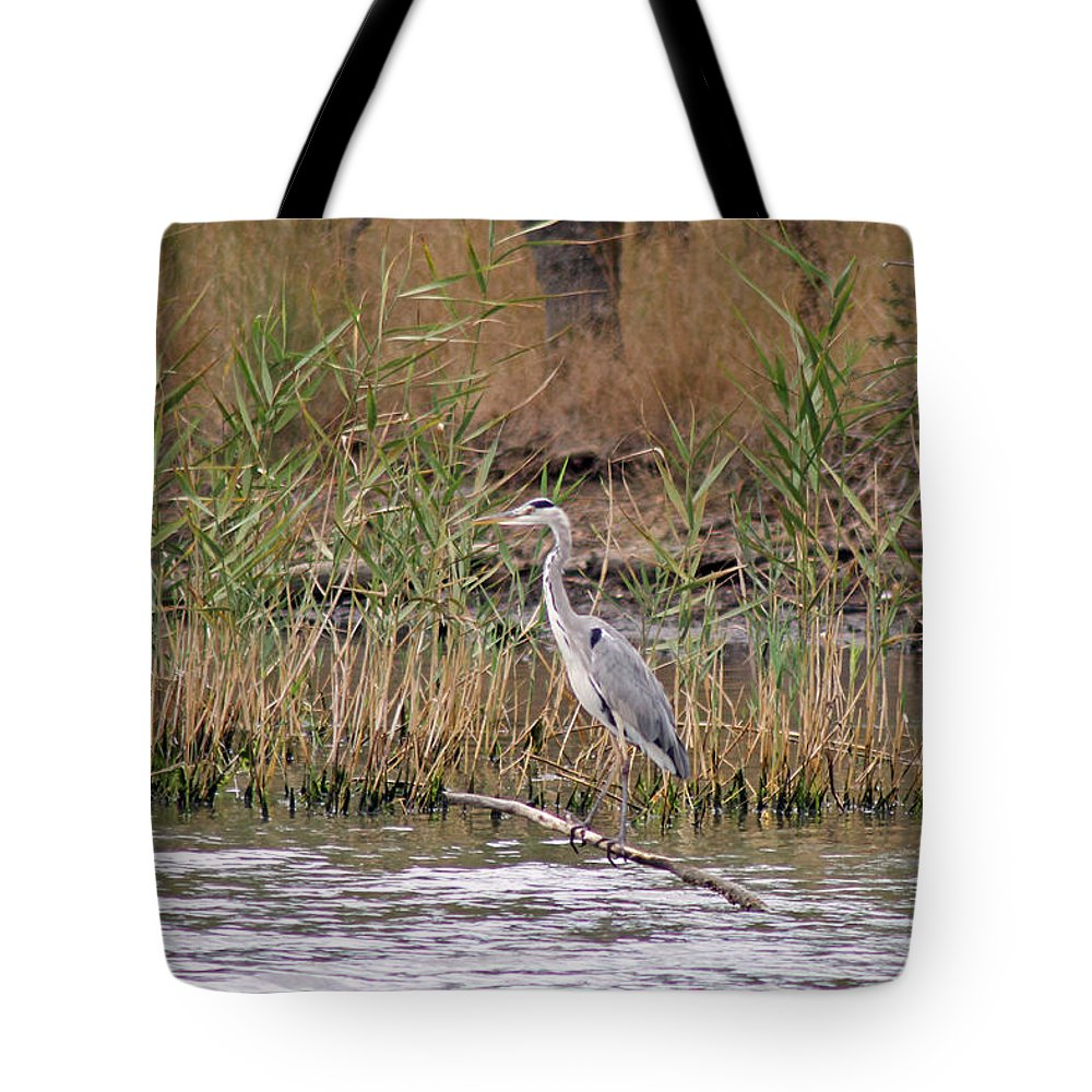 Birds Tote Bag featuring the photograph Grey Heron by Tony Murtagh