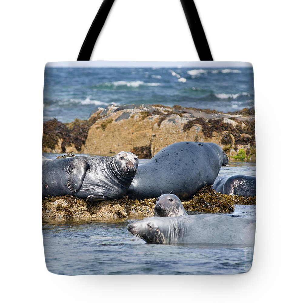 Britain Tote Bag featuring the photograph Grey Seals by Andrew Michael