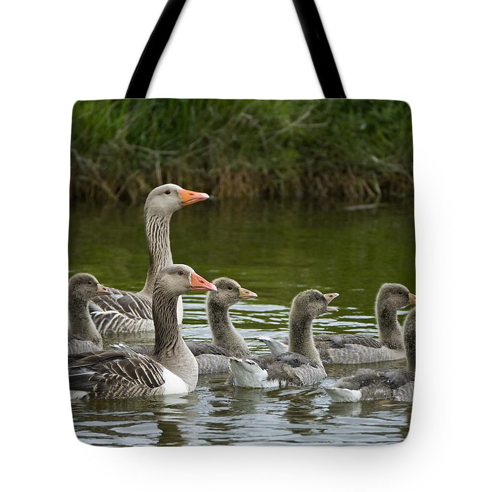 Fn Tote Bag featuring the photograph Greylag Goose Anser Anser Couple by Willi Rolfes